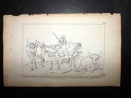 Sayer Compleat Drawing-Book 1757 Antique Print. Study of Cattle 84
